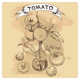 Vector set of tomatoes for design Royalty Free Stock Photos