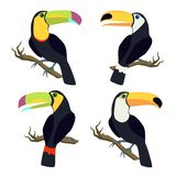 Vector set with toucan Royalty Free Stock Image