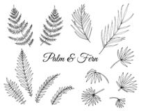 Vector set of tropical fern and palm leaves stock illustration