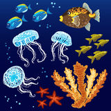 Vector set with tropical fishes. Vector set with tropical fishes, jellyfishes and corals. Marine elements for your design.  It can be used for decorating of Royalty Free Stock Photo