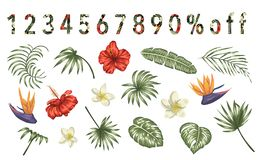 Vector set of tropical flowers and leaves isolated on white background. Bright realistic collection of exotic design elements. vector illustration