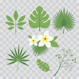 Vector set of tropical leaves. Palm leaf, banana leaf, hibiscus, plumeria flowers. Jungle trees.Botanical floral illustration. Set Stock Photography