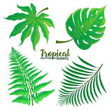 Vector set of tropical palm leaves isolated on white background. Vector illustration in hand drawn cartoon style. Can be used for design your website or print Stock Image