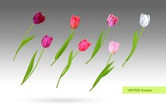 Vector set of tulips flowers Stock Image