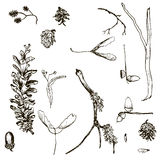 Vector set of twigs, pine cones, seeds and acorns Royalty Free Stock Photo
