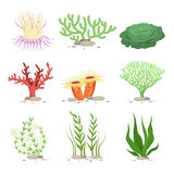 Vector set of underwater plants. Funny illustrations in cartoon style isolate on white vector illustration