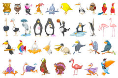 Vector set of various birds illustrations. Royalty Free Stock Photos