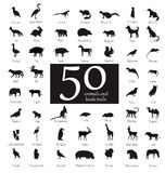 Vector set of very detailed animal silhouettes with name. On  background Royalty Free Stock Images