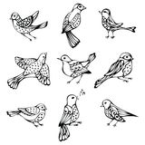Vector set of vintage birds. Royalty Free Stock Photo