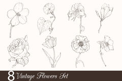 Vector Set of 8 Vintage Drawing Flowers With Tulip, Poppy, Iris, Rose, Magnolia, In Classic Retro Style. Royalty Free Stock Photos