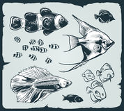 Vector set: vintage illustration of fish Stock Photos