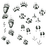 Vector set of walking wild wood animal and bird tracks Stock Photography