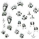 Vector set of walking wild wood animal and bird tracks. Vector hand drawn set of walking wild wood animal and bird tracks Stock Photography