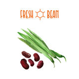 Vector set of watercolor beans elements on white background. Royalty Free Stock Images