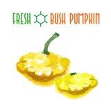 Vector set of watercolor bush pumpkin Stock Images