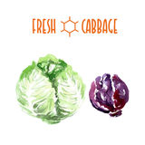 Vector set of watercolor cabbage Royalty Free Stock Photos