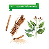 Vector set of watercolor cinnamon elements. Herb collection Stock Photography