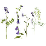 Vector set of watercolor drawing plants Royalty Free Stock Photos