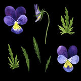 Vector set of watercolor drawing violet flowers Royalty Free Stock Image