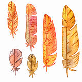 Vector set of watercolor feathers Stock Photo