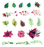 Vector Set of watercolor flowers and berries Royalty Free Stock Photography