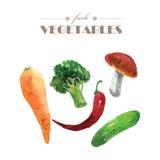 Vector set of watercolor fresh vegetables on white background. Fresh food illustration. Good for magazine and book articles, poster design, restaurant menu royalty free illustration