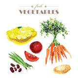 Vector set of watercolor fresh vegetables on white background. Royalty Free Stock Images
