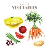 Vector set of watercolor fresh vegetables on white background. Fresh food illustration. Good for magazine and book articles, poster design, restaurant menu vector illustration