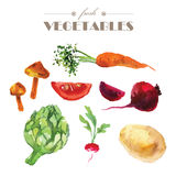 Vector set of watercolor fresh vegetables on white background. Royalty Free Stock Image