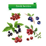 Vector set of watercolor fruits on white background. Royalty Free Stock Image