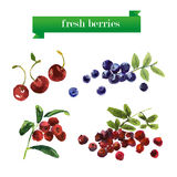 Vector set of watercolor fruits on white background. Stock Photo