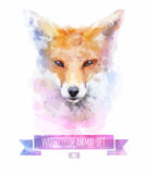 Vector set of watercolor illustrations. Cute fox Royalty Free Stock Photography