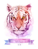 Vector set of watercolor illustrations. Cute tiger. Vector set of animals. Tiger hand painted watercolor illustration isolated on white background Royalty Free Stock Photo