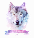 Vector set of watercolor illustrations. Cute wolf Stock Images