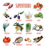 Vector set of watercolor illustrations of healthy superfoods. Big set of vector doodle illustrations of the most popular super foods. Collection of hand drawn Royalty Free Stock Image