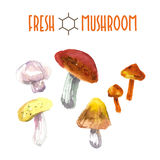 Vector set of watercolor mushroom Stock Photos