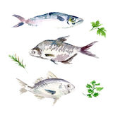 Vector set of watercolor sea food. Royalty Free Stock Photography