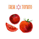 Vector set of watercolor tomato elements on white background. Royalty Free Stock Photography