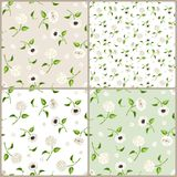 Set of white, beige and green seamless floral patterns. Vector illustration. Vector set of white, beige and green seamless floral patterns Stock Photography