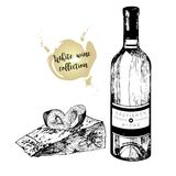 Vector set of white wine in engraved vintage style. Wine bottle, plum and cheese slice.  on white background. Stock Images