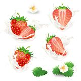 Vector set of whole and half strawberries with flowers, leaves and cream, milk or yogurt splash. Royalty Free Stock Image