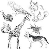 Vector set: wild and domestic animals Stock Photos
