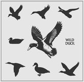 Vector set of wild ducks. Vector monochrome set of wild ducks Royalty Free Stock Image