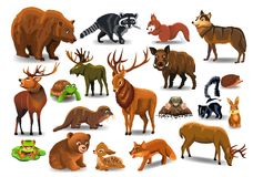 Vector set of wild forest animals like stag, bear, wolf, fox, tortoise stock illustration