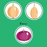 Vector set of yellow and red onions in flat style Royalty Free Stock Image