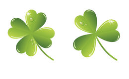 vector shamrock Stock Photos