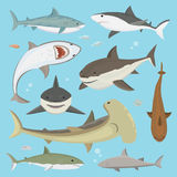 Vector shark big hunter monster different pose set. Vector illustration toothy white swimming angry shark. Animal sea isolated character underwater cute marine Stock Photo