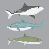 Vector shark character. Stock Images