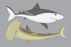 Vector shark character. Stock Photo