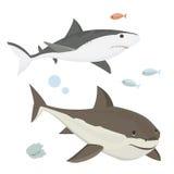 Vector shark character. Royalty Free Stock Photo